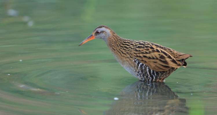 Vogelschutzreservat Palud