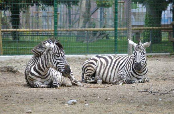 Zoo Heim vieler fremder Tierarten Aufmacher