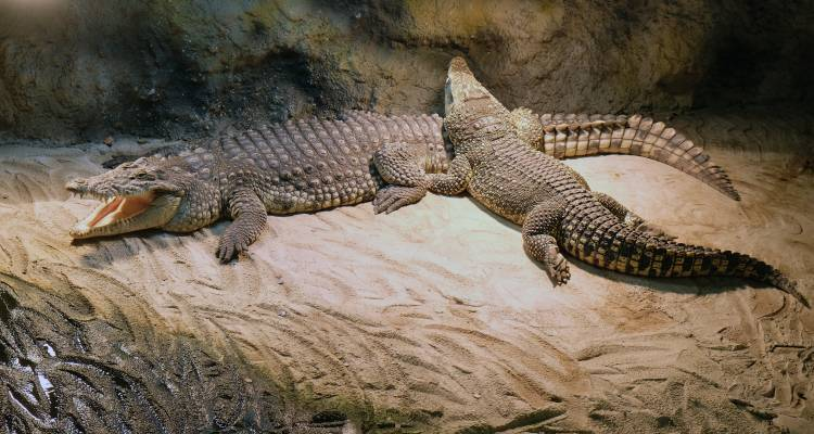 Zoo Heim vieler fremder Tierarten