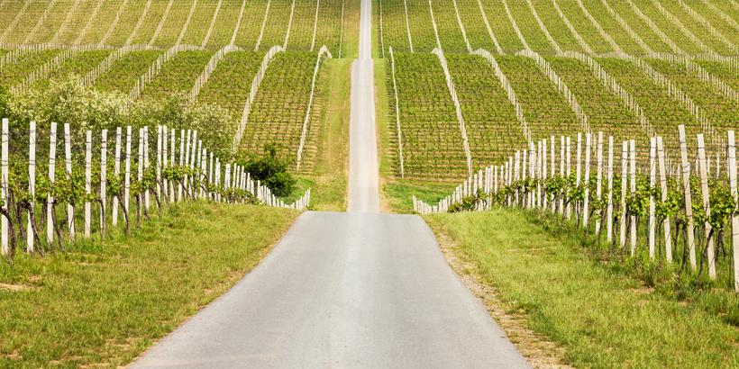 Ilok Weinanbaugebiet
