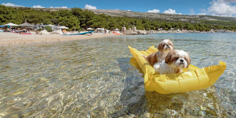 Camping Village Šimuni Hunde im Wasser