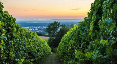 Weintour ins Umland von Pula