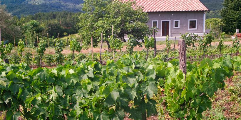 Weintour ins Umland von Pula Weinberg mit Haus