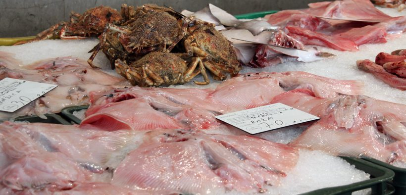 Rijeka für Fischliebhaber
