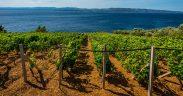 Der Welttag des Weines