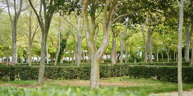 Camping in seinem Ursprung mitten in der Natur - Stellplätze unter Bäumen