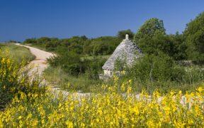 Der Weg der Steinhütten Istrien - Kažun