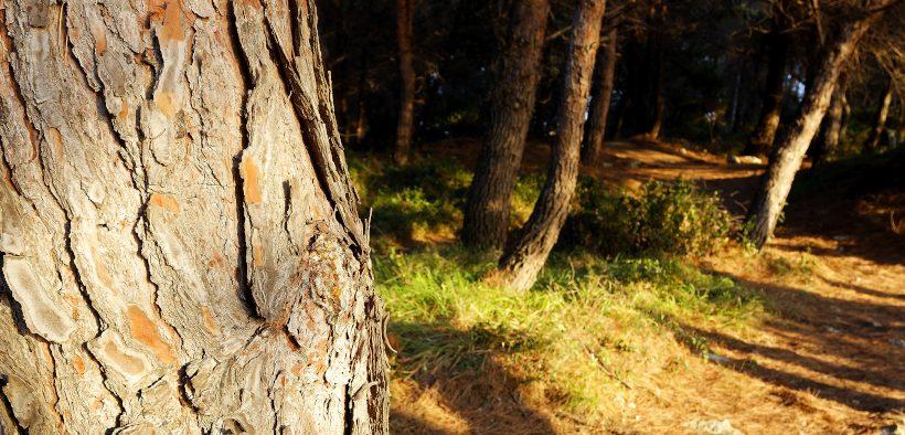 """Sonnenschein auf Waldboden im Waldpark """"Busoler Park"""" in Pula in Istrien"""