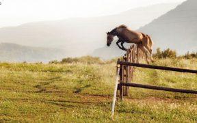 Pferd auf der Ranch Terra beim Sprung über Gatter an trübem sonnigem Morgen