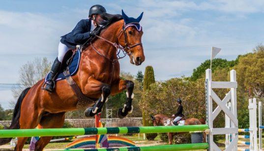 Pferd und Reiter beim Sprungreiten im Wettkampf - Reiten in Zagreb