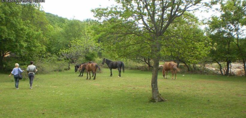 Ranch Predrag Rubčić
