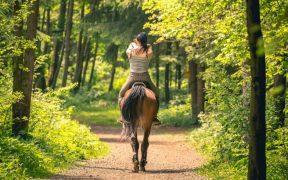 Reiten Kvarner Bucht - mit dem Therapiepferd erholsam durch den Wald