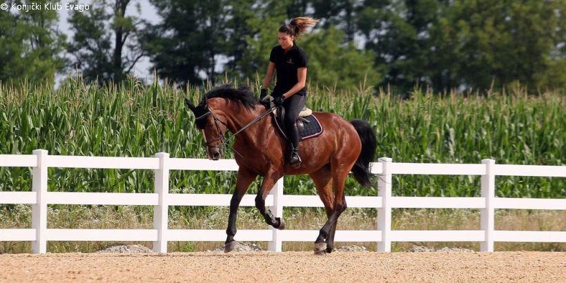 Reiterin mit Pferd beim Training im Reitclub Evago - Konjički Klub Evago