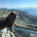 Sogar eine Katze wagt sich mutig auf den gläsernen Steg von Biokovo.