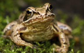Froggyland