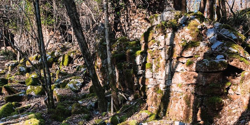 Wandern im Wald