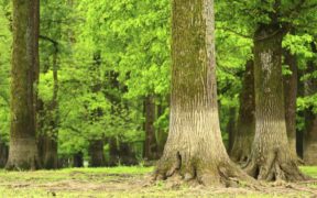 Wald rund um Slavonski Brod