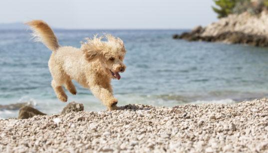 Hundestrände in Istrien