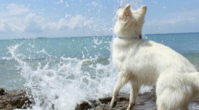 Hundestrände auf den dalmatischen Inseln